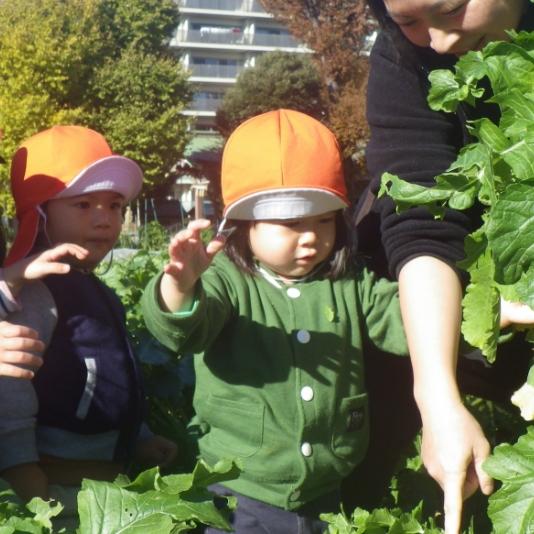 季節の野菜の収穫体験